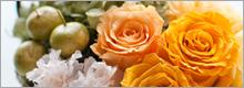 viva-flower